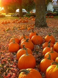 Pumpkins in fall